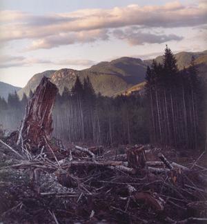 300-A Clear Cut (A Landscape at War)
